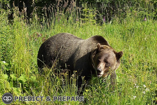 Be Prepared when encountering a bear - PREDICT & PREPARE
