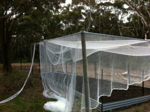 bird netting garden - Predict and Prepare .com